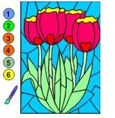 Раскраска по цифрам Тюльпаны